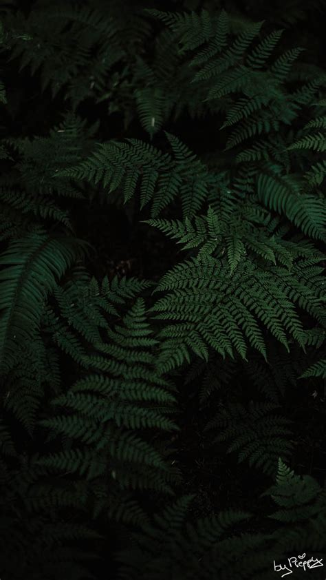 Please contact us if you want to publish a dark forest phone. 10 Tropical Jungle iPhone X Wallpapers | Preppy Wallpapers
