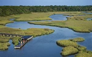 Understanding Coastal Wetland Loss