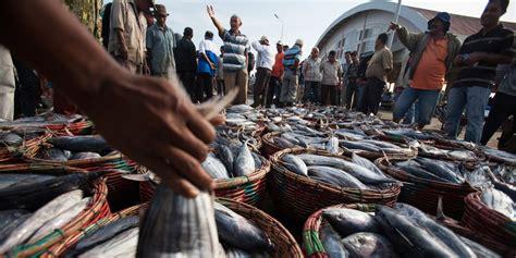 overfishing fish fry bigger week fishing oceans citizen