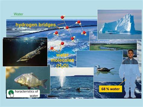 3319135112 evaporites a geological compendium elements