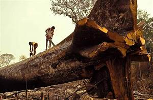 Deforestation in Amazon Could Reduce Snowfall in Sierra ...