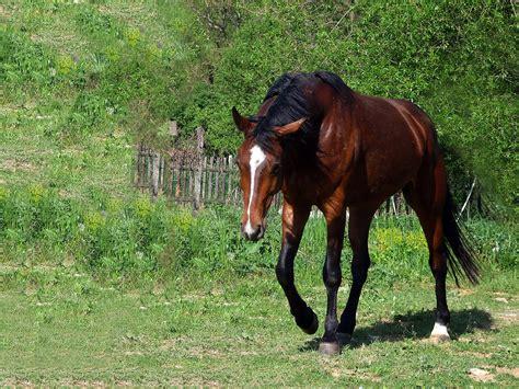 pferd hintergrundbilder kostenlos tiere