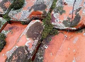 Flechten Entfernen Hausmittel : moos entfernen moos entfernen moos entfernen auf terrasse ~ Lizthompson.info Haus und Dekorationen