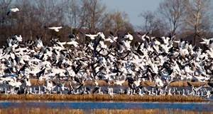Migratory Bird Habitat Initiative | NRCS
