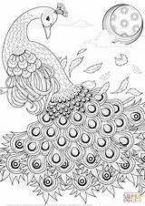 Coloring Peacock Pages Graceful Printable Drawing Paper Dot sketch template
