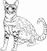 Cat Coloring Animals Pages Animal sketch template