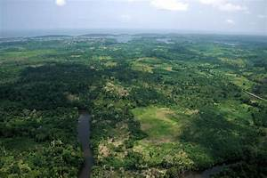 essay about deforestation the environment in côte d ivoire challenges and