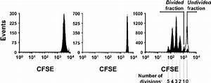 Fluorescence Profiles Of Cfse