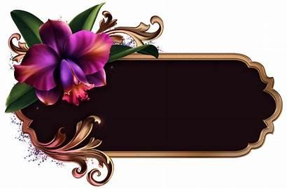 Romantic Border Frames Frame Orchids Flower Photoshop