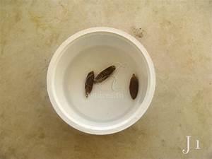 Comment Faire Germer Une Graine : comment faire pousser des graines de palmier dattier en pot ~ Melissatoandfro.com Idées de Décoration