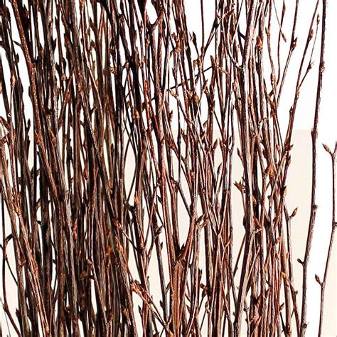 preserved flowers decorative branches birch branches