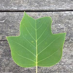 Was Ist Das Für Ein Baum : was ist das f r ein baum 1 natur blaetter ~ Watch28wear.com Haus und Dekorationen