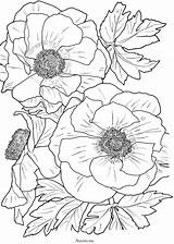 Coloring Pages Flowers Bloom Flower Anemone Close Adult Printable Adults Colouring Floral Books Sheet Pretty Line sketch template