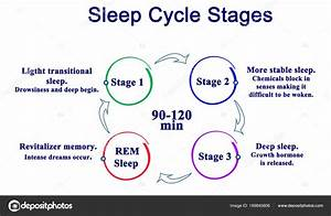 Diagram Of Sleep Cycle Stages  U2014 Stock Photo  U00a9 Vaeenma