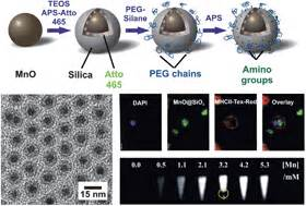 Multifunctional Superparamagnetic Mno Sio Core Shell