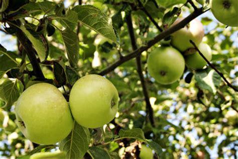 great apple picking locations  long island longislandcom