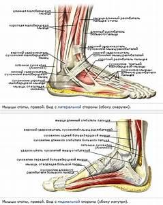 Болит нога в суставе бедра при ходьбе