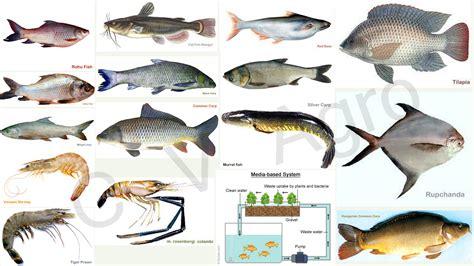 fish farming   agro