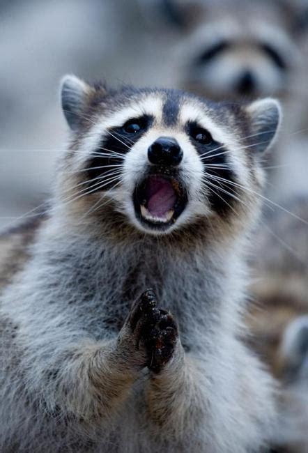images  surprised cute animals nature pictures