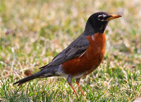 all of nature bluebirds robins and worms