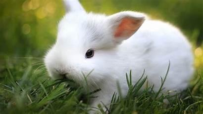 Bunny Wallpapers Windows Wallpapertag