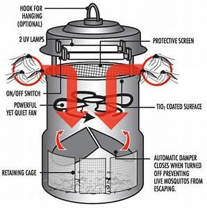 Dynatrap Wiring Diagram