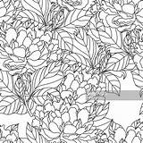 Coloring Peony Adults Bouquet Seamless Bohemia Colorir Peonia Cuciture Vettore Senza Artwork Boekpagina Volwassenen Kleurende Kunstwerk Getrokken Drawn Disegnato Livro sketch template