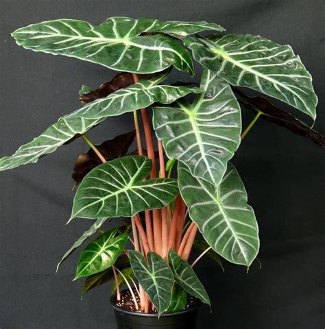 plantes vertes d int 233 rieur la nature dans notre quotidien plantes d int 233 rieur plante verte
