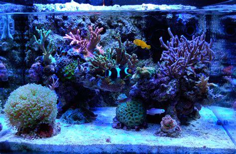 mmike1992 2009 featured nano reefs featured aquariums monthly featured nano reef aquarium