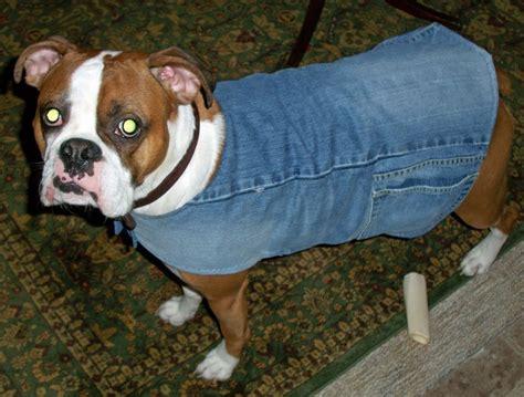 lined dog jacket  recycled denim   scarf