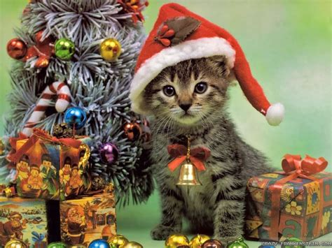 Reminder Send In Your Christmas Cats « Why Evolution Is True