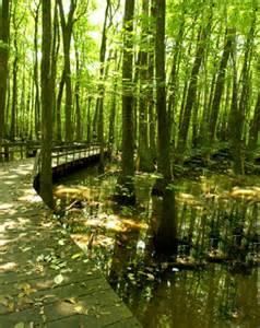 Blackwell Swamp Alabama