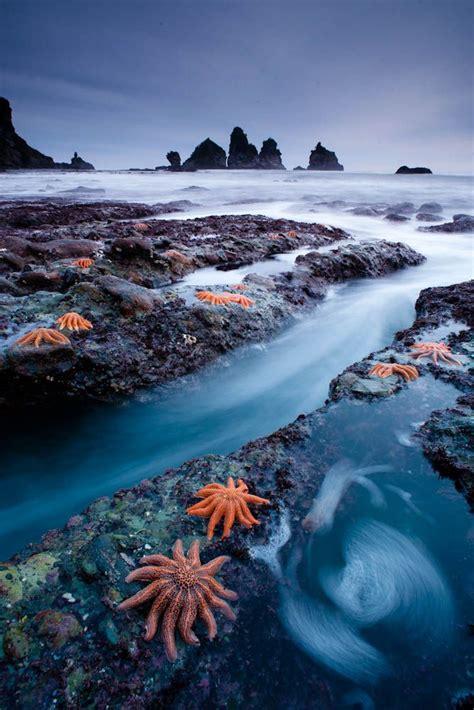 West Coast Starfish Colony New Zealand By Mundoview