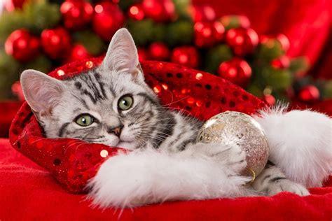 Weihnachten Amazing With Weihnachten Einsame Frau Vor