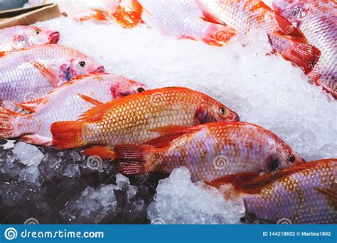 grouper fish ice