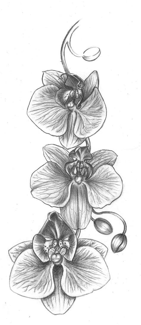 Free Image on Pixabay - Orchid, Flower, Drawing | Orchid