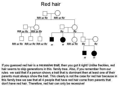 what hair color is dominant understanding genetics