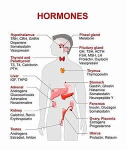 Medical Basics  U2014 Endocrine System Study Guide