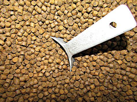 wild fish  feed seachoice