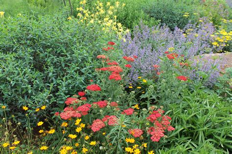 landscaping for pollinators jersey friendly yards