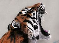 Tiger Colored Pencil Drawings