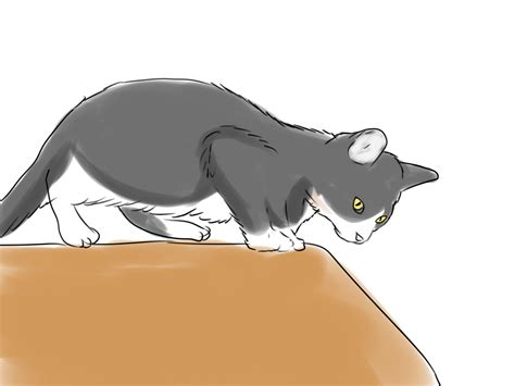 How To Gain A Cat's Trust 14 Steps (with Pictures) Wikihow