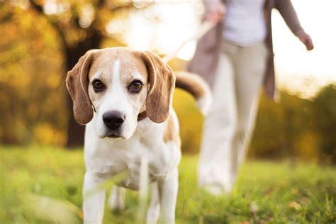 mit diesen  schritten lernt dein hund wie er alleine