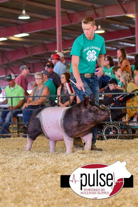 south dakota state fair   market hogs top