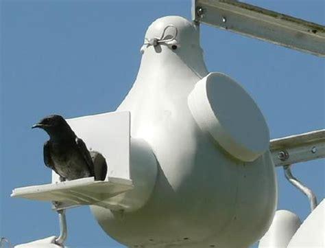 troyers birds paradise gourds poles purple martin gourd bird houses