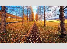 November Wallpaper Pictures WallpaperSafari