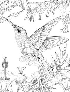 Printable Hummingbird Coloring Pages | Coloring: Animal Kingdom Pages/Books | Pinterest