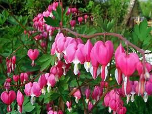 Blumen Für Schattigen Balkon : blumen f r blumenk sten archives seite 7 von 10 balkon oasebalkon oase ~ Orissabook.com Haus und Dekorationen