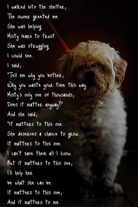 shelter dogs    dogs  legged love adopt