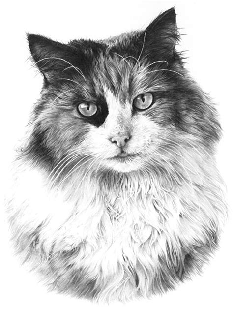 Drawing From Line To Life » Drawing Fur